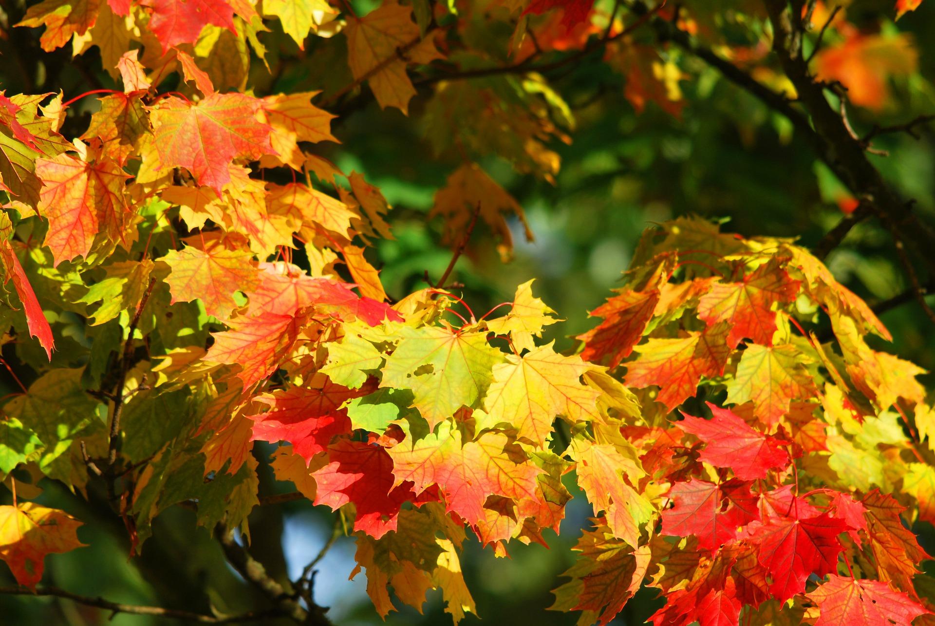 Herbstkarte